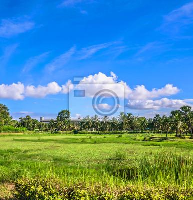 pole trawy i palm kokosowych