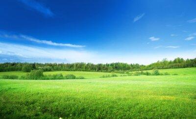 Fototapeta pole trawy i perfect sky