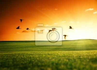 Fototapeta pole trawy i ptaki latające