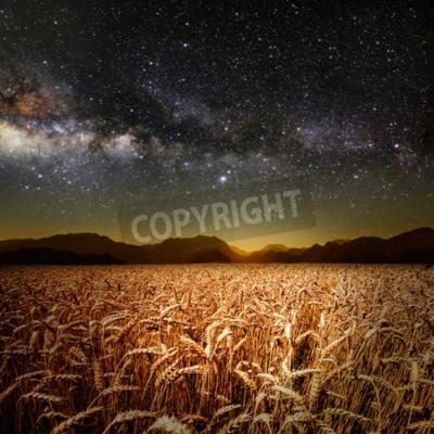 Fototapeta pole trawy. łąki pszenicy pod gwiazdami niebo. Elementy tego zdjęcia dostarczone przez NASA