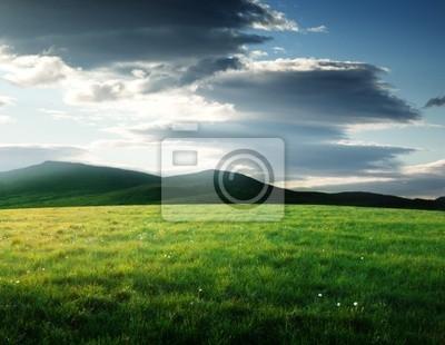Fototapeta pole trawy w północnej góry