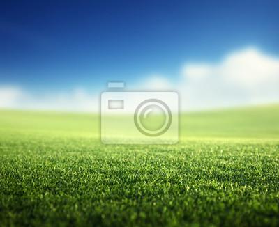 Fototapeta pole trawy wiosennej (płytkie DOF)