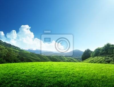 Fototapeta pole trawy wiosną i góry