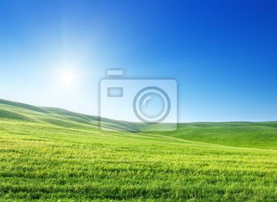 Fototapeta pole trawy wiosną i słoneczny dzień