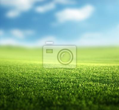 Fototapeta pole wiosennej trawy (płytkie DOF)