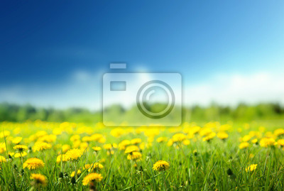 Fototapeta pole wiosennych kwiatów i doskonałe niebo