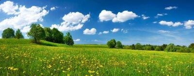 Fototapeta Pole z mlecze i błękitne niebo
