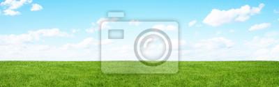 Fototapeta Pole zielone i błękitne niebo