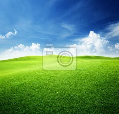pole zielone i niebieskie niebo