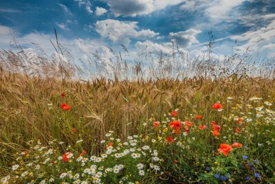 Fototapeta Polne kwiaty latem