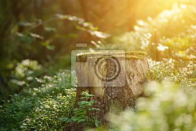 Północny scandinavian sosnowy las, Szwecja podróżuje outdoors rocznika modnisia tło z fiszorką