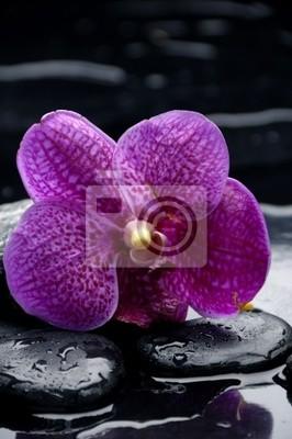 Połóż orchideę na kamieniu z kropli wody
