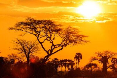 Fototapeta Pomarańczowy blask afrykańskiego słońca