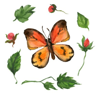 Fototapeta pomarańczowy motyl i kwiaty