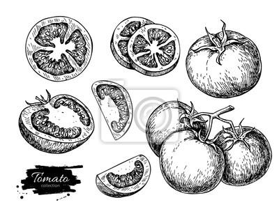 Fototapeta Pomidor wektorowej zestaw. Izolowane pomidor, pokrojony kawałek warzywa w