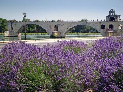 Fototapeta Pont d'Avignon
