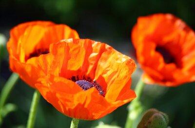 Fototapeta Por kwiat