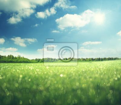Fototapeta poranna mokra trawa i doskonałe niebo
