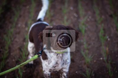 Fototapeta portrait d'un chien
