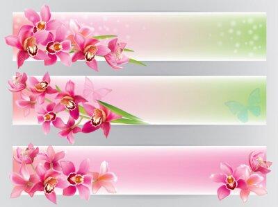 Fototapeta Poziome transparenty z orchidei