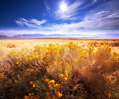 Fototapeta Prairie