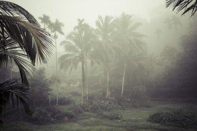 Fototapeta promieni słonecznych wlać za pośrednictwem liści w lesie deszczowym na Sri Lance