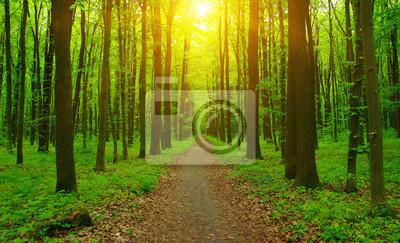 Promienie lasu i słońca