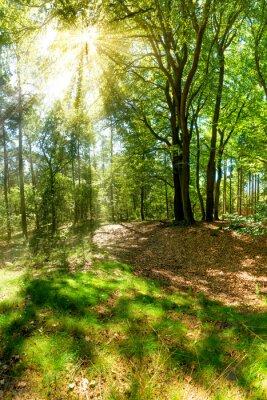 Fototapeta Promienie słońca zerwania przez napowietrzna w lesie
