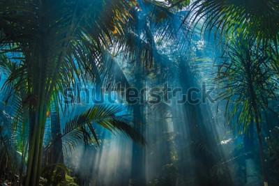 Fototapeta Promienie światła między drzewami pam w ogrodzie dżungli