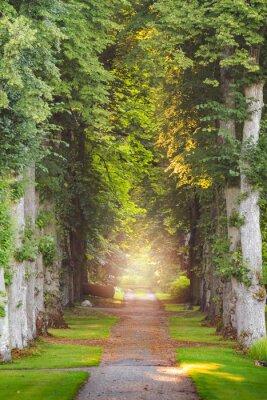 Fototapeta Prosto leśna droga z pięknymi promieniami słońca i mgły i mgły