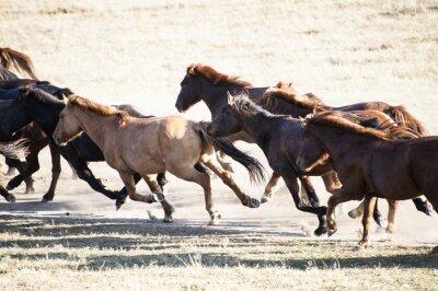 Fototapeta Prowadzenie koni