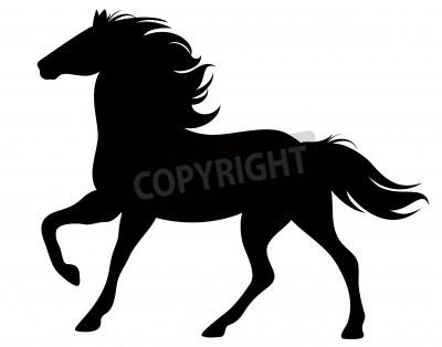 Fototapeta prowadzenie konia sylwetkę