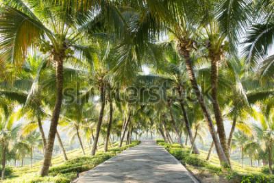 Fototapeta Przejście z kokosowym drzewem w ogródzie