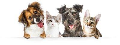 Fototapeta Psy i koty łapy na stronie internetowej Banner