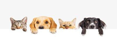 Fototapeta Psy i koty wgląd w baner internetowy