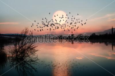 Fototapeta Ptaki sylwetki latające nad jeziorem przed zachodem słońca