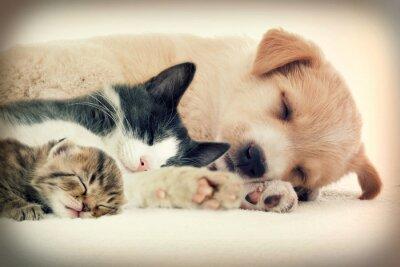 Fototapeta Puppy i Kitten śpi