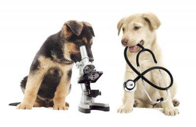 Fototapeta Puppy i mikroskop