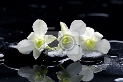 Purpurowa orchidea i czarne kamienie z refleksji