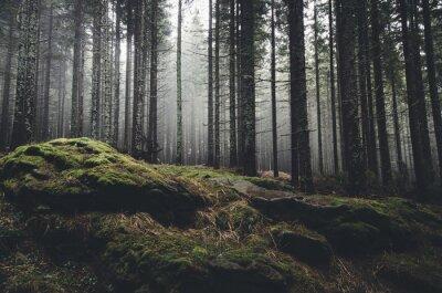 Fototapeta pustynia krajobraz z lasu sosny i mech na skałach
