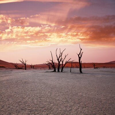 Fototapeta Pustynia Namib 1