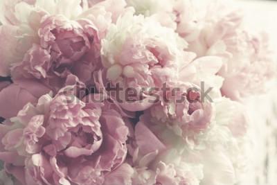 Fototapeta Puszyste różowe piwonie kwitną tło