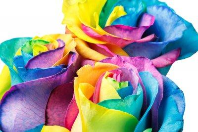 Fototapeta Rainbow róż
