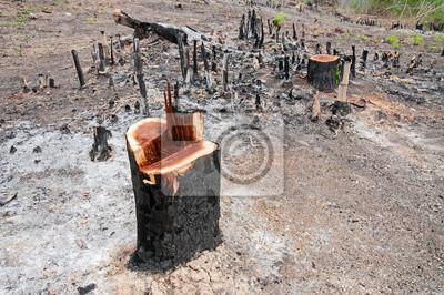 Rainforest wyciąć i spalić w uprawach roślin, Tajlandia