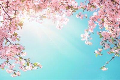 Fototapeta Rama gałęzi kwitnących wiśni na tle niebieskiego nieba i fruwające motyle na wiosnę na przyrodę na zewnątrz. Różowe kwiaty sakury nieostrość, marzycielski romantyczny obraz wiosennej natury.