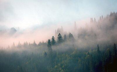 Fototapeta rano mgła w lesie górskim