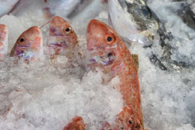 Fototapeta Raw fish on ice for sell in the street market. Bodrum, Turkey. Close up