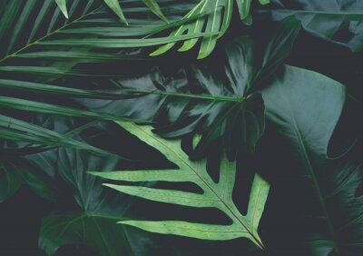 Fototapeta Real liści z białym tle kopia przestrzeń background.Tropical Botaniczny charakter koncepcji projektu.