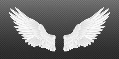 Fototapeta Realistic angel wings. White isolated pair of falcon wings, 3D bird wings design template. Vector concept white cute feathered wing animal on a transparent background