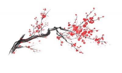 Fototapeta Realistic sakura blossom isolated on white background.